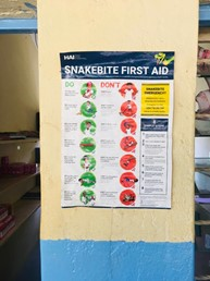 snakebite first-aid